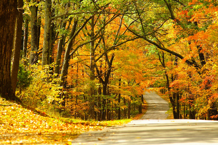 Road in Brown County State Park, Indiana during Autumn